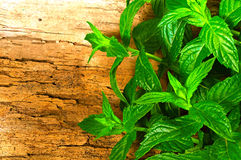 Mint on a wooden background. Juicy fresh mint on a wooden background Stock Photos