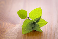 Mint. On a wooden table Royalty Free Stock Image