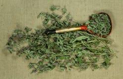 Mintkaramell grönmynta torra örtar Växt- medicin, phytotherapy medici royaltyfri foto