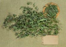 Mintkaramell grönmynta torra örtar Växt- medicin, phytotherapy medici arkivfoton