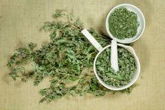 Mintkaramell grönmynta torra örtar Växt- medicin, phytotherapy medici royaltyfri bild