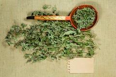 Mintkaramell grönmynta torra örtar Växt- medicin, phytotherapy medici arkivbilder