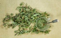 Mintkaramell grönmynta torra örtar Växt- medicin, phytotherapy medici arkivbild