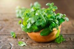 Mintkaramell Grupp av det nya gröna organiska mintkaramellbladet på trätabellen arkivfoto