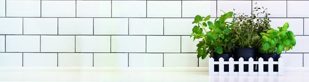 Mintkaramell timjan, basilika, persilja - aromatiska kökörter i den vita träspjällådan på köksbordet, tegelstentegelplattabakgrun Arkivbild