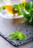 Mintkaramellblad Mint leaves Te mint tea tea för glass växt- för horsetail för fokus för arvensekoppequisetum selektiv naturmedic Royaltyfri Bild