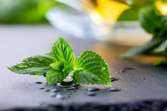 Mintkaramellblad Mint leaves Te mint tea tea för glass växt- för horsetail för fokus för arvensekoppequisetum selektiv naturmedic arkivbilder