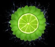 Mintkaramellsidor i cirkel med limefrukt arkivbilder