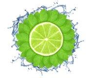 Mintkaramellsidor i cirkel med limefrukt arkivbild