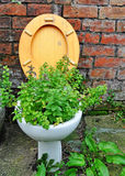 Minty Fresh. A toilet bowl containing fresh mint in an urban setting Royalty Free Stock Images