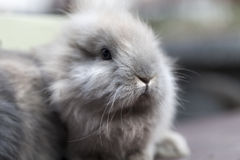 Small rabbit Royalty Free Stock Photo