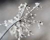 Minuscule frozen branch wintertime in Hungary Stock Photography