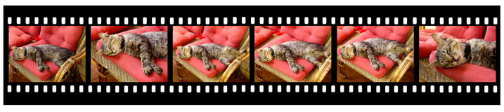 Minute From A Cat's Life Royalty Free Stock Image