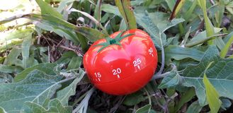 Minuterie de Pomodoro - minuterie de cuisine formée par tomate mécanique pour faire cuire ou étudier photographie stock