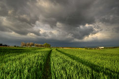 10 minutes into the storm. First spring storm rapidly approaching the countryside Royalty Free Stock Photography
