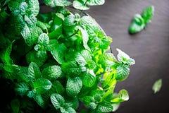 Minze Bündel frische grüne organische tadellose Blätter Stockbilder