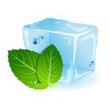 Minze mit Eis Stockfotografie