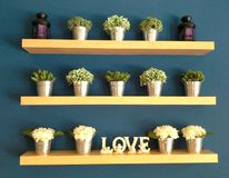 Miłość kwiatu drzewo Fotografia Stock
