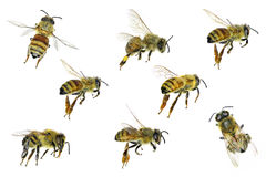 Miodowa pszczoła Obraz Royalty Free