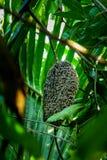 Miodowe pszczoły przy honeycomb zdjęcie royalty free