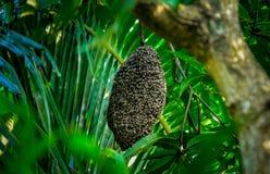 Miodowe pszczoły przy honeycomb fotografia stock
