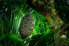Miodowe pszczoły przy honeycomb obraz stock
