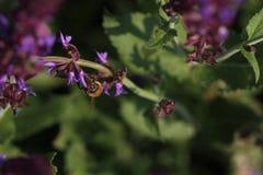 Miodowe pszczoły Zdjęcia Stock