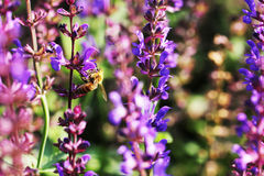 Miodowe pszczoły obraz stock