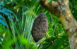 Miodowe pszczo?y przy honeycomb zdjęcie stock