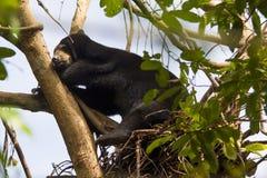 MIODOWEGO niedźwiedzia sen NA drzewie fotografia royalty free