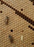 Miodowej pszczoły ruchliwie działanie na honeycomb zdjęcia royalty free