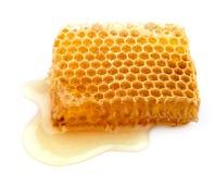 miodowi honeycombs Fotografia Royalty Free