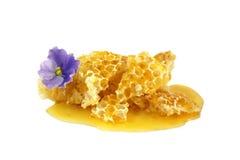 miodowi kwiatów honeycombs odizolowywali biel Zdjęcie Stock