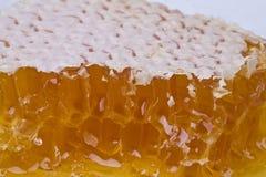 miodowy honeycomb Zdjęcie Royalty Free