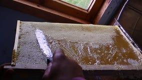 Miodowy obcieknięcie od miodowej chochli na honeycomb, nad żółtym tłem Gęsty organicznie miodowy maczanie od drewnianego miodu zbiory wideo