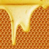 Miodowy obcieknięcie na honeycomb tle Obraz Royalty Free