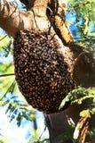Miodowy pszczoła rój obrazy royalty free