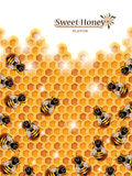 Miodowy tło z pszczołami Pracuje na Honeycomb Obrazy Royalty Free