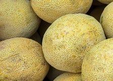 Miodunka melony Obraz Stock