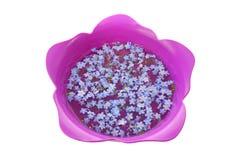 Miosótis em Tulip Bowl Foto de Stock Royalty Free
