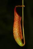 miotacz roślina obrazy stock
