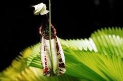 miotacz roślinnych Zdjęcie Royalty Free