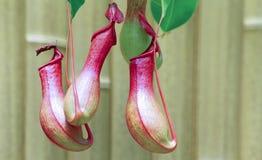 Miotacz rośliny Zdjęcia Royalty Free
