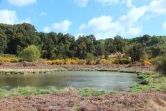 Miotły i sulphureous jezioro Fotografia Royalty Free