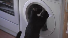 Miró furtivamente su gato divertido en el lavadero metrajes