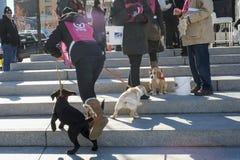 Mira puppies dogs volunteer Royalty Free Stock Image