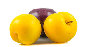 Mirabell and Damson Plum Royalty Free Stock Image