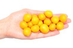 Mirabelle jaune à disposition de femme Fond blanc Photo stock