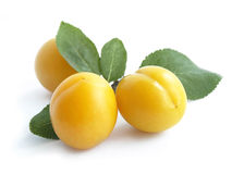 Mirabelle plum (Prunus domestica). Also known as mirabelle prune, isolated on white stock image