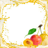 Mirabelle plum splash Stock Photos